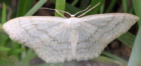 [Moths unknown]